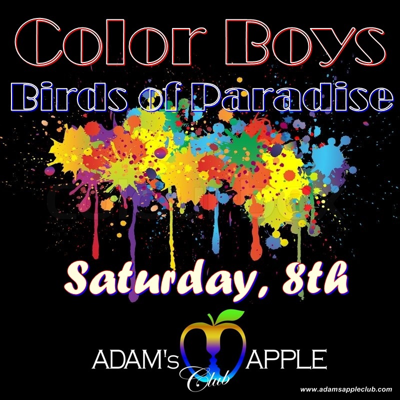 Color Boys - Birds of Paradise Party Adam's Apple Club Chiang Mai