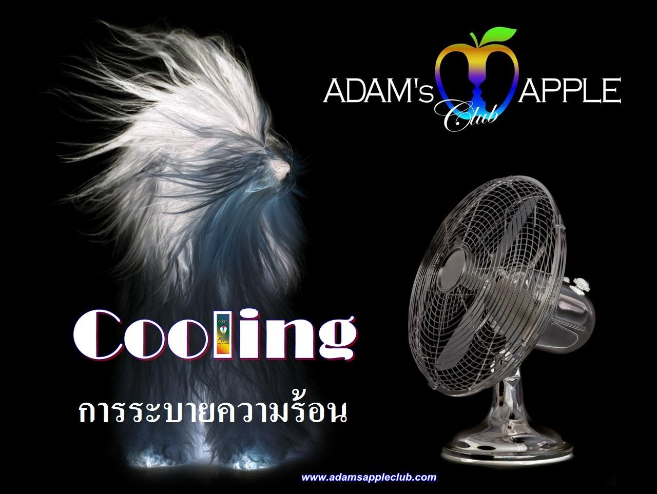 Stay Cool Adams Apple Club