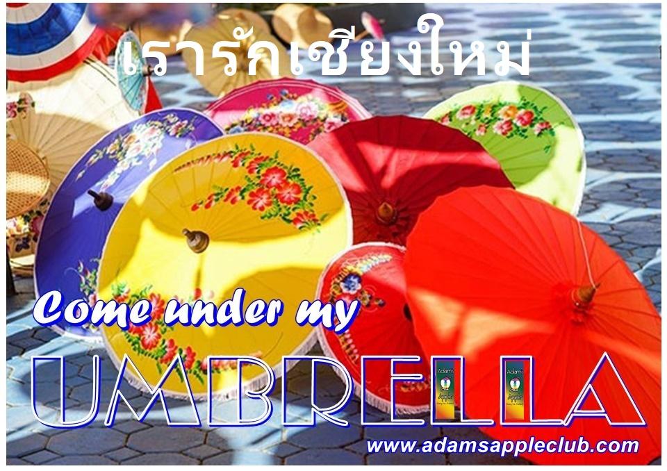 Come under my UMBRELLA Chiang Mai