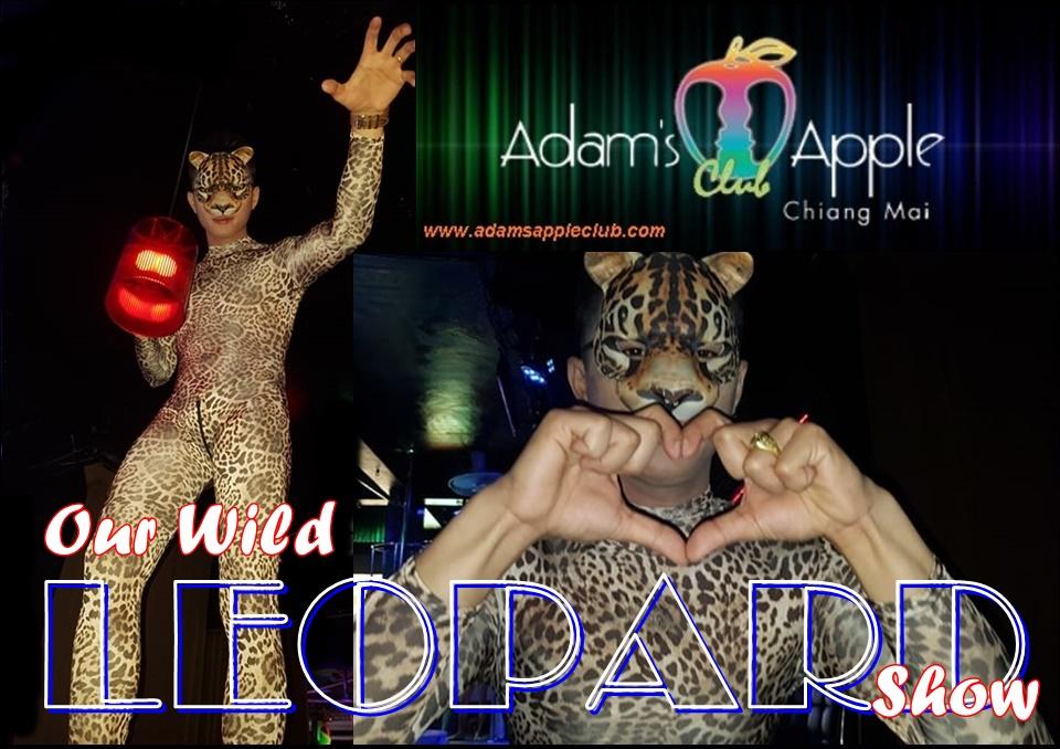 Our Wild Leopard Show Adams Apple Club