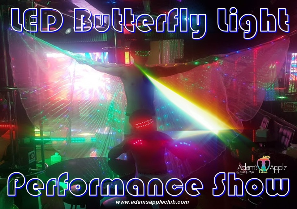 LED Butterfly Light Performance Show Adult Entertainment Chiang Mai Thailand Ladyboy Liveshow Asian Boys Nightclub men entertain men Gay Bar Host Club